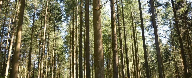 Bosque de producción en Borgoña Franco Condado