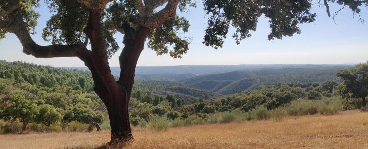Porquê investir na floresta Portuguesa?