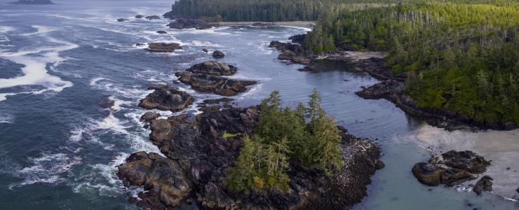 The coastal forest, Canada's national treasure