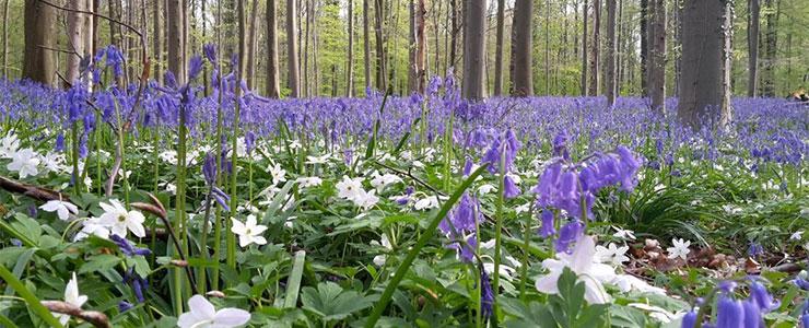 Le CEPF : la voix européenne des propriétaires forestiers