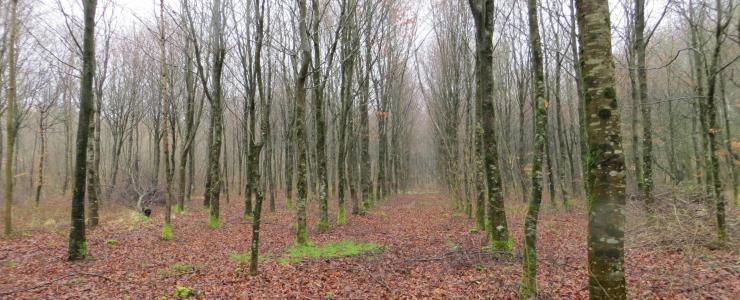 Forêt dans les Hauts de France