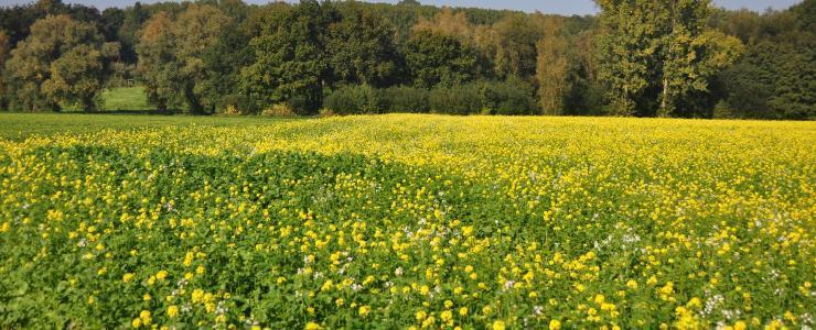 08 Ardennes - De très beaux massifs forestiers