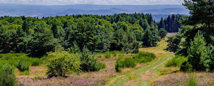Acquisition de forêt : différents modes de propriété