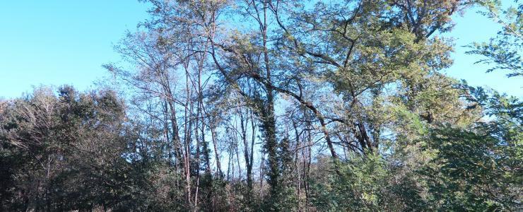 Propriété Forestière dans les Landes