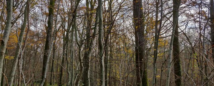 Forêt de loisir avec habitation