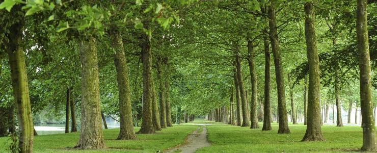 14 Calvados - Des forêts denses et majoritairement privées