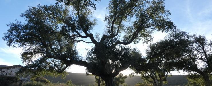 Massif forestier dans le Centre du Portugal