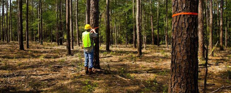 Forestry Consultant
