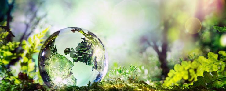 La forêt, un investissement sans frontières !