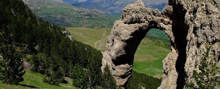 65 Hautes Pyrénées - Des opportunités pour les sylviculteurs