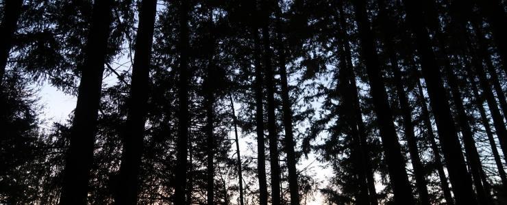 Parcelle Forestière dans le Puy-de-Dôme