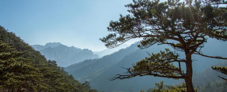 La Forêt Gariwang