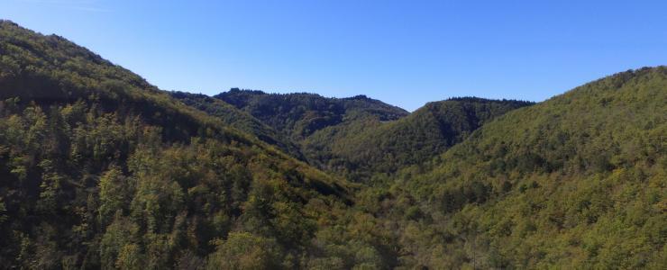 Propriété forestière dans l'Aude