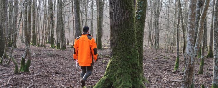 Rétrospective 2020 des ventes du cabinet Forêt Investissement
