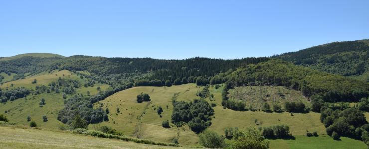 Forêt de production dans le massif central